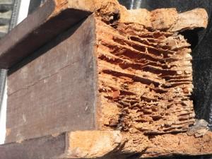 danno_termite1