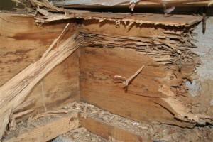 danno_termite2