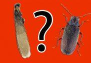 termiti-tarli
