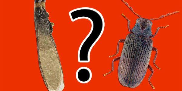 5 segreti per riconoscere i tarli dalle termiti, se non sei uno ...